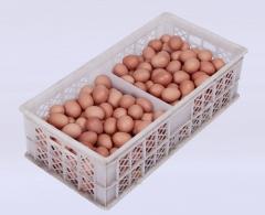 百年路通  筐装  22.5公斤/箱(净重)