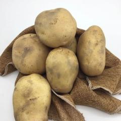 早大白(新) 土豆 規格200g以上 1KG