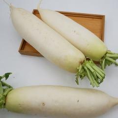 白萝卜   规格500g以上   1KG