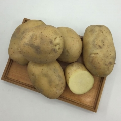土豆(早大白)   规格 200g 以上  1KG