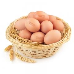 〖德青源〗  鸡蛋  10.5KG/箱