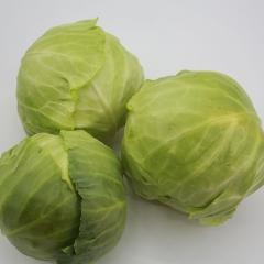 圆白菜   1KG