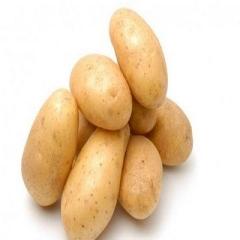 土豆(白心)200g