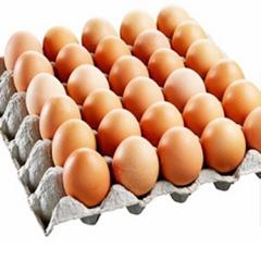 宏都顺精装鲜鸡蛋 20kg/箱