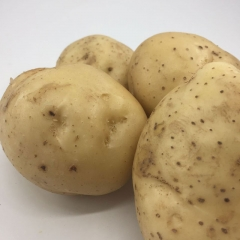 新土豆白心  200g以上 1KG