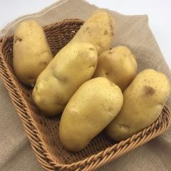 新土豆黄心  100g以上 1KG