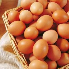 【诺威】鲜鸡蛋     筐装 22.5KG(净重)