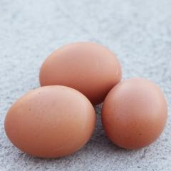 金利兴无抗箱装鲜鸡蛋,20kg/箱(净重)