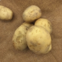 新土豆(白心) 规格200g以上 1KG