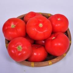 西红柿 100g以上 1KG