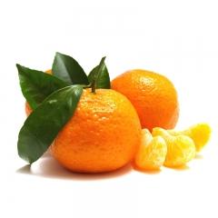 砂糖橘 规格200g以上 1KG
