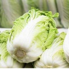 大白菜  规格1500g以上  1KG