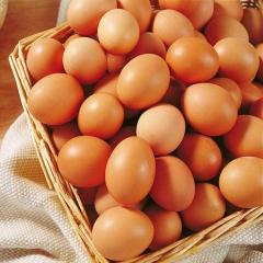 精品小雞蛋(天津必送達)