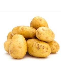 土豆(黄心)