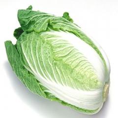 大白菜  2000g以上