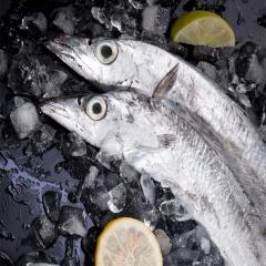 2/3帶魚
