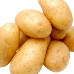 土豆(黃心)早大白200g 以上