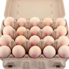 德清源雞蛋360枚