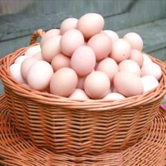 華都峪口褐殼雞蛋箱裝20kg/箱(凈重)