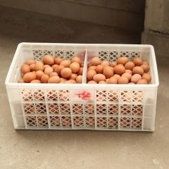 【绿都兴合】 精品鸡蛋 箱装 240枚