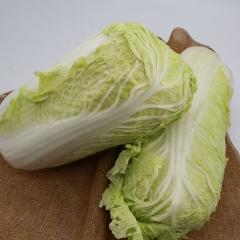 大白菜 1500g以上 1KG