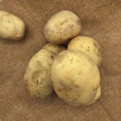 早大白(新)  土豆   规格200g以上     1KG