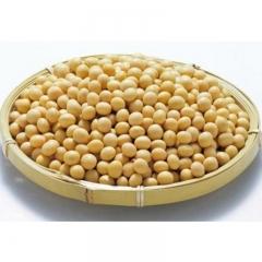 黄豆(新)
